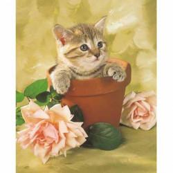 Image pour tableau 3d GK2430078 -  format 24x30 cm Chaton et pot de fleur