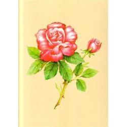 Image 3D - ASTRO 390 - 24X30 - ROSE ROSE
