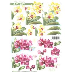 Carterie 3D A4 non découpée - Orchidée