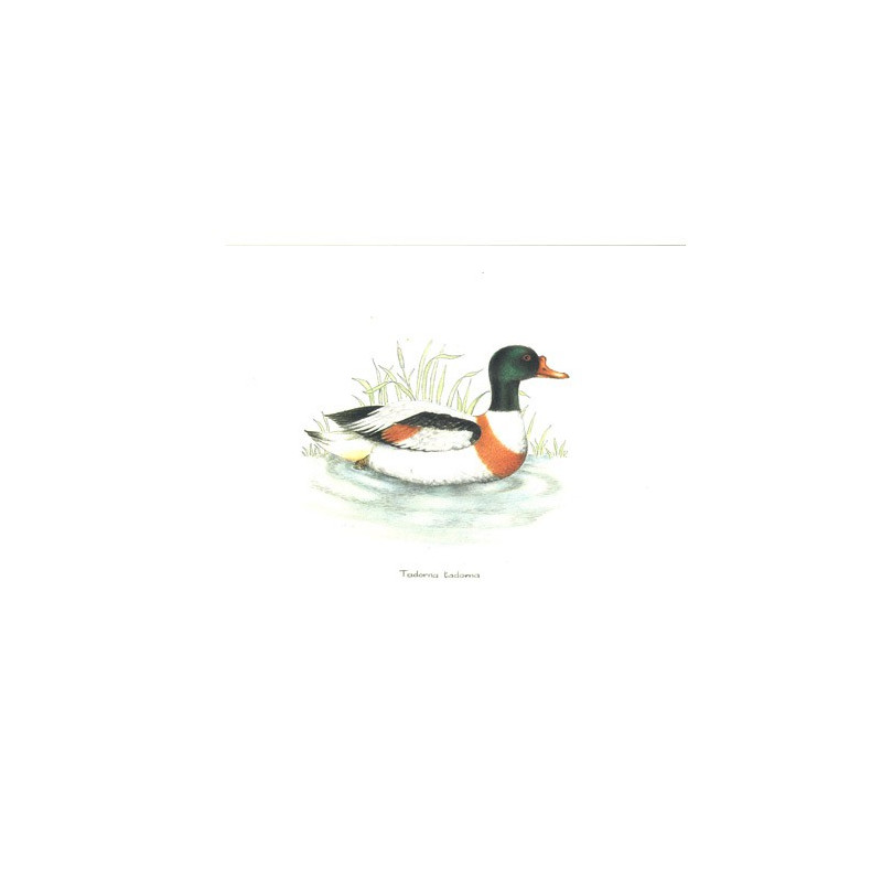 Image 3D RO23 - 20x25 - canard col vert
