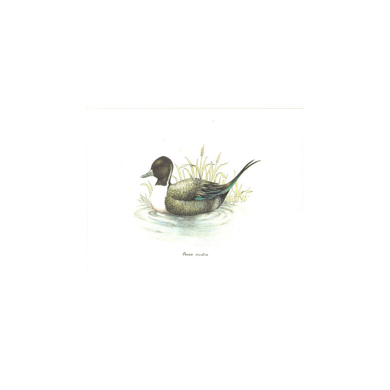 RO24 - 20x25 - Canard