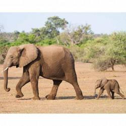 GK2430093 - 24x30 - Eléphant et son petit