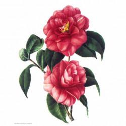 Image 3D - GK2430096 - 24x30 - 2 fleurs rouges