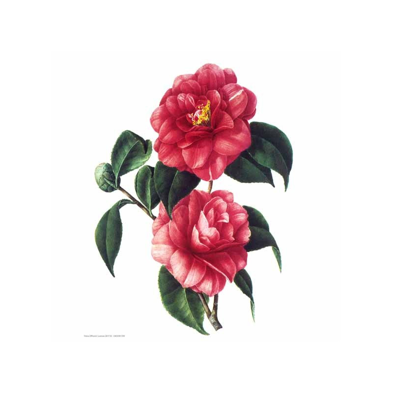 Image pour tableaux 3D 24x30 cm 2 fleurs rouges GK2430096 - Aux Bleuets Loisirs créatifs à Reims