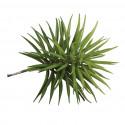 "Plante Succulent ""Senecio"", 10x9,5cm pour mini garden"
