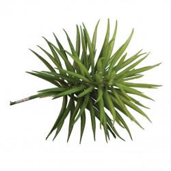Plante Succulent