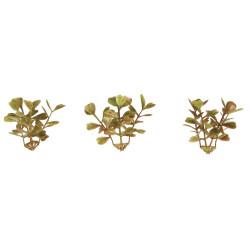 Mini-buis, branche, 4,5cm 12 pièces pour mini jardin