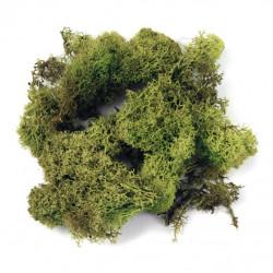 Mousse d'Islande vert clair sachet 30 g