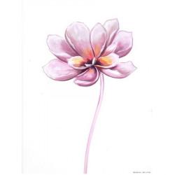 Image 3D - 3107026 - 24x30 - magnolia papier brillant