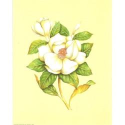 ASTRO 389 - 24X30 - Fleur blanche fond jaune