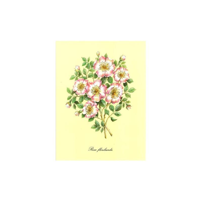 Image pour tableaux 3d ASTRO 432 - 24X30 - Rosa floribunda - Aux bleuets Loisirs créatifs à Reims