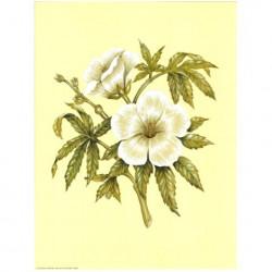 Image pour tableaux 3d ASTRO 581 - 24X30 - 2 Fleurs blanches   - Aux Bleuets Loisirs créatifs à Reims