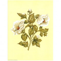 Image 3D astro 582 - 24x30 - 2 fleurs blanches