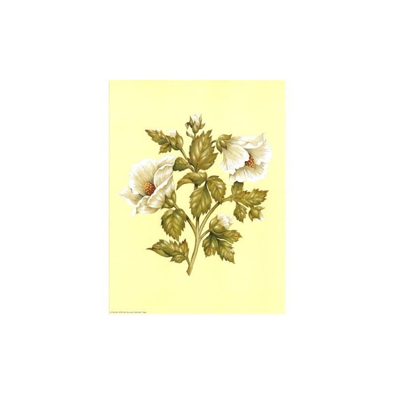 ASTRO 582 - 24X30 - 2 Fleurs blanches