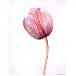 Image 3D 3107025 - 24x30 - tulipes papier brillant