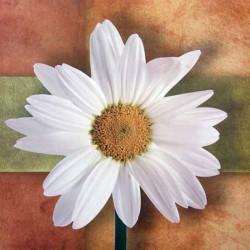 Image 3D - dm33055 - 30x30 - marguerite