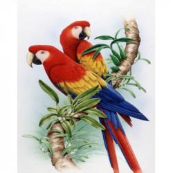 Image 3D - gk3040047 - 30x40 - perroquet