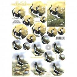 Carte 3D à découper - Oiseaux - 630062