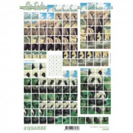 Carte 3D à découper - Eléphants et pandas - 630206