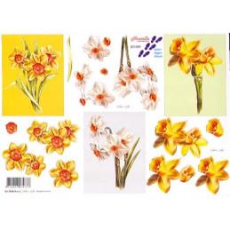 Carte 3D à découper - 821589 - Fleur blanches et jaunes