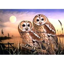 Image pour tableaux 3D 30x40 cm GK3040007 chouettes