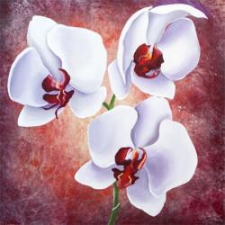 Image pour tableaux 3D format 30x30 cm GK3030030 Orchidée blanche sur fond rouge