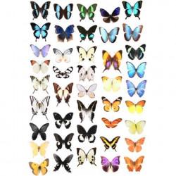 Image pour tableaux 3D - GK2430022 - 24x30 - Papillons -  Aux Bleuets Loisirs créatifs à Reims
