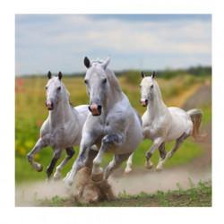 Image pour tableaux 3D GK3030011 Format 30x30 cm les 3 chevaux blancs