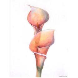 Image 3D - 3107027 - 24x30 - arum papier brillant