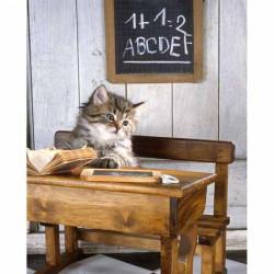 Image pour tableau 3d GK2430054 -  format 24x30 cm Châton sur banc d'école